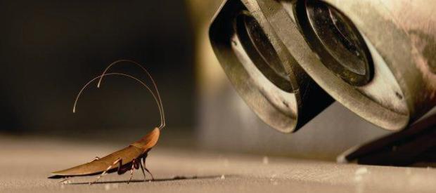 Kackerlackan väntar troget på sin husse