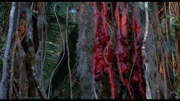 Predatorn köttar på