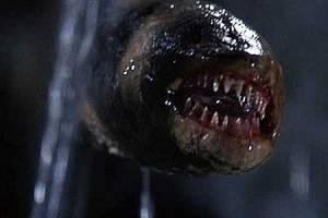 Leviathan - Grrrr!