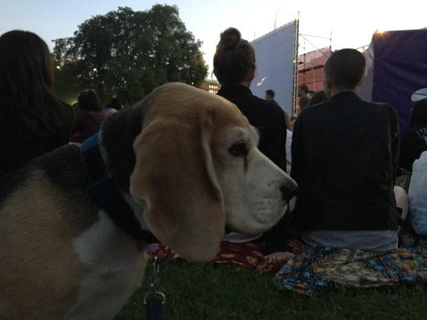 Beaglen Casper var inte rädd